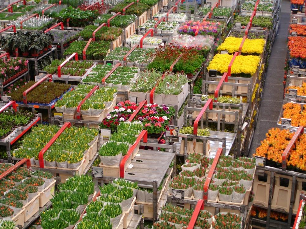Flower Auction in Netherlands